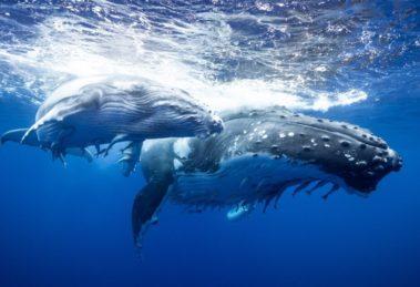 Que son las ballenas de Bitcoin